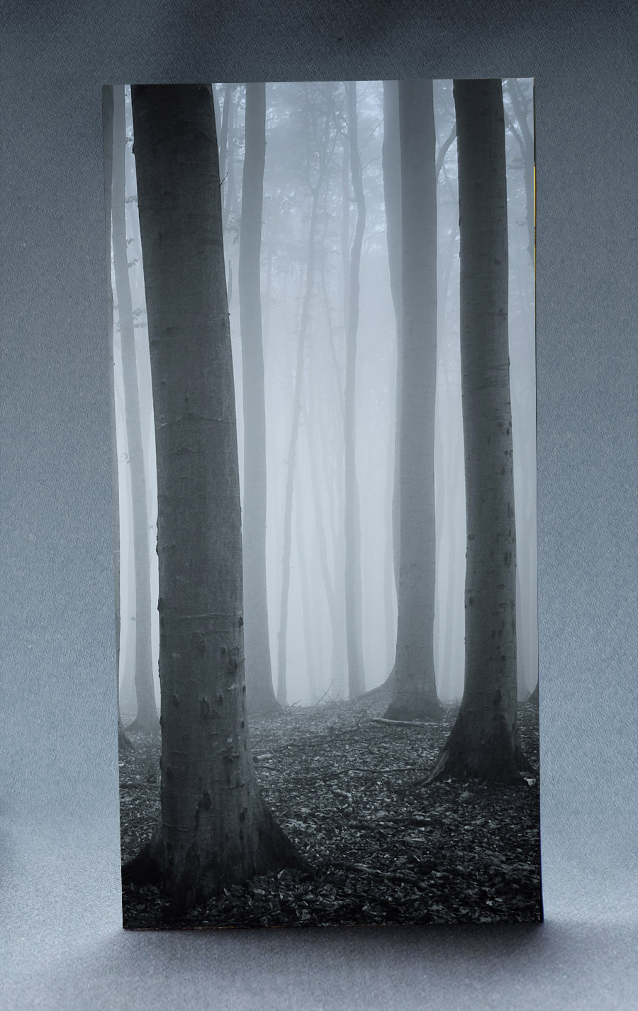 Creepy Woods 1:6 Scale Striking Backdrop